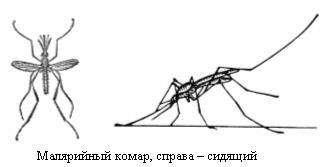 Писька комары